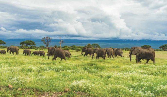 viaje novios tanzania