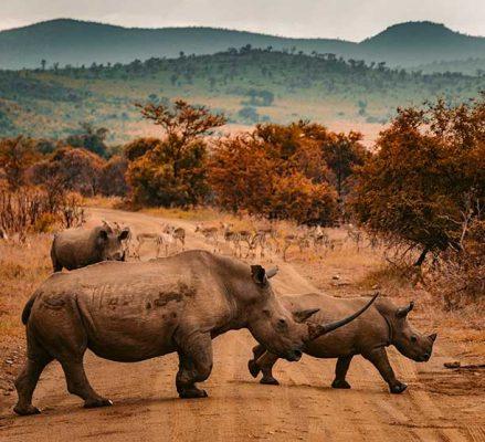 Viajar a Sudafrica con Viajes Nakara