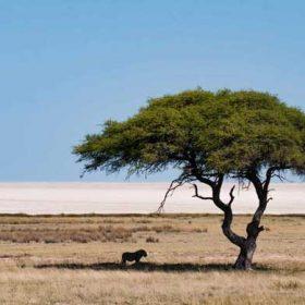 VIAJE A NAMIBIA: Bellezas de Namibia