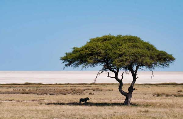 Viajar a Namibia con Viajes Nakara
