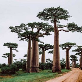VIAJE A MADAGASCAR: Encantos de Madagascar