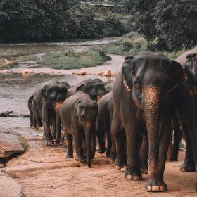 VIAJE A SRI LANKA: Esencias de Sri Lanka en grupo