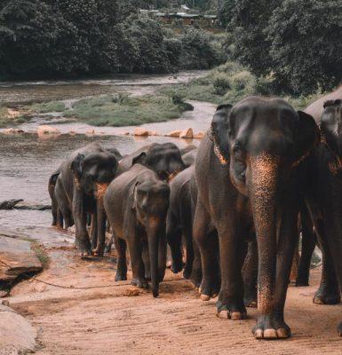 Viajar a Sri Lanka con Viajes Nakara