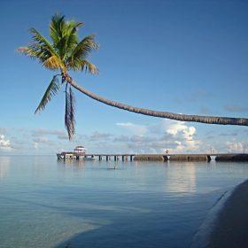 VIAJE A INDONESIA: Borneo,  Sulawesi, Yogyakarta y Bali