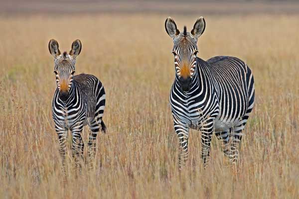 VIAJE A SUDÁFRICA: Lo mejor de Sudáfrica