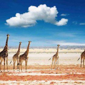 VIAJE A TANZANIA: Safari en familia por Tanzania