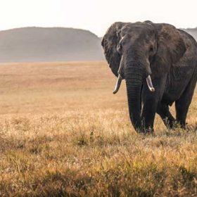 VIAJES A KENIA: Safari por Kenia