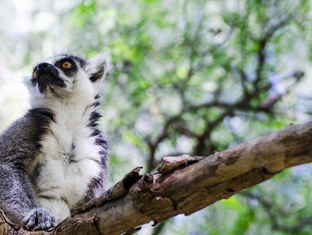 VIAJE A MADAGASCAR: Selvas y Fauna