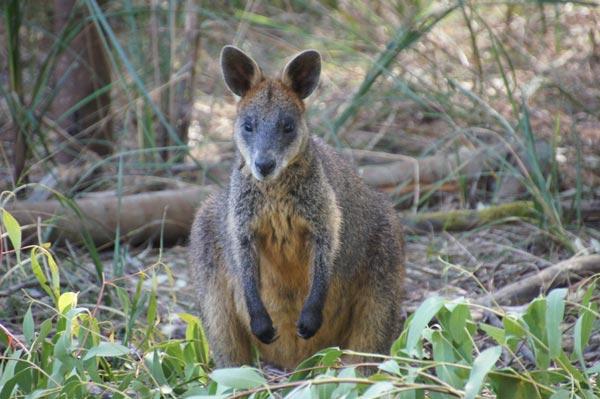 VIAJE A AUSTRALIA: Imagenes de Australia