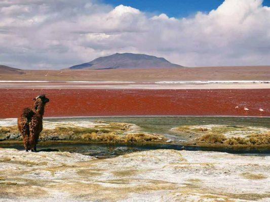 Viajar a Bolivia con Viajes Nakara