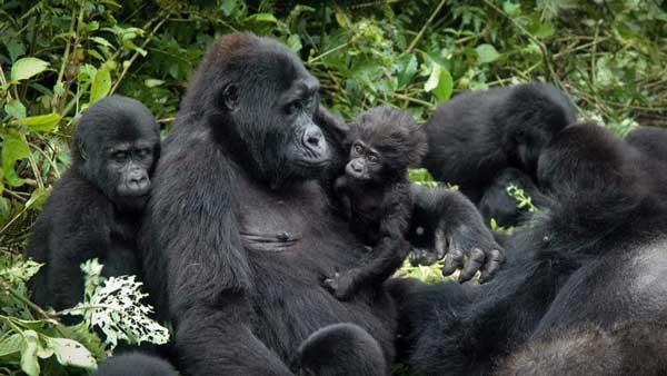VIAJE A UGANDA: Safari Bakiga