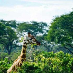 VIAJE A UGANDA: Safari Kiboko