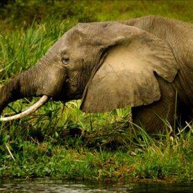 VIAJE A UGANDA: Safari Twiga